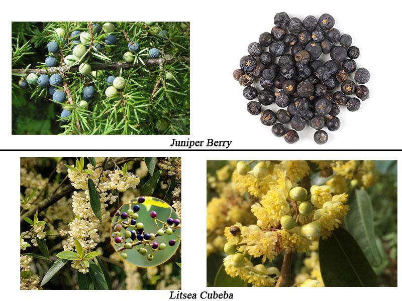 منابع ترکیبات عطر - میوه ها