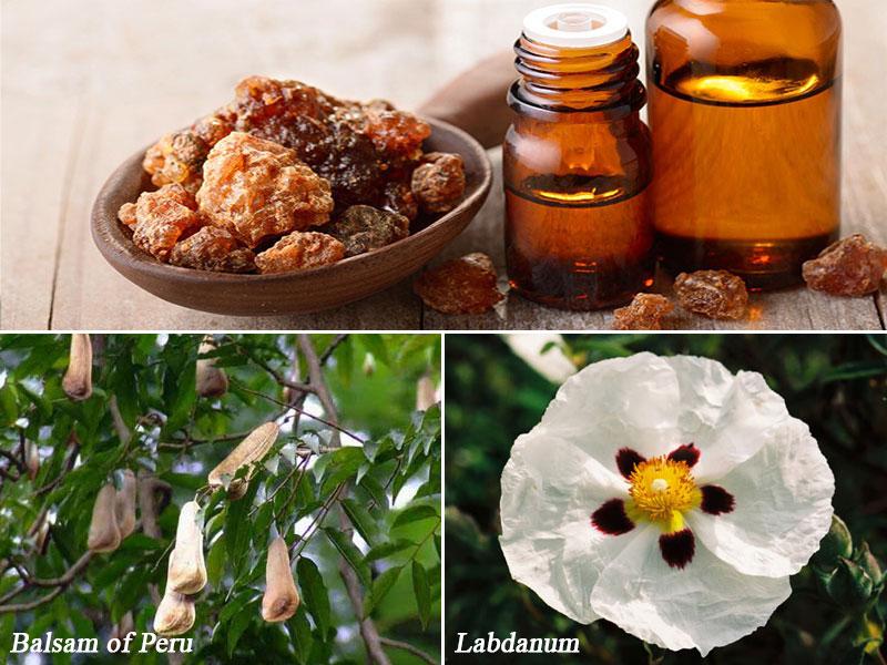 منابع ترکیبات عطر - صمغ